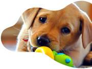 Labradors Warrington